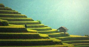 Agricoltura: ecco cosa coltivare per guadagnare un buon profitto