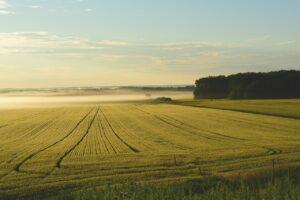Come posso far fruttare un terreno agricolo? - La risposta degli esperti