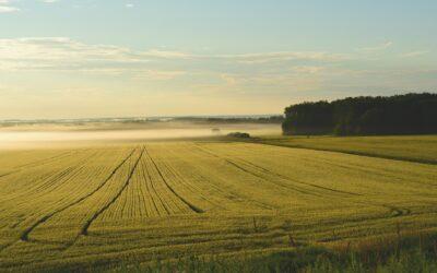 Come posso far fruttare un terreno agricolo? – La risposta degli esperti
